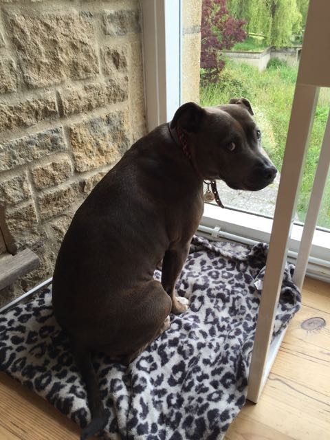 Blog Dog - 1