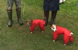 dog coats, Wellington Boots